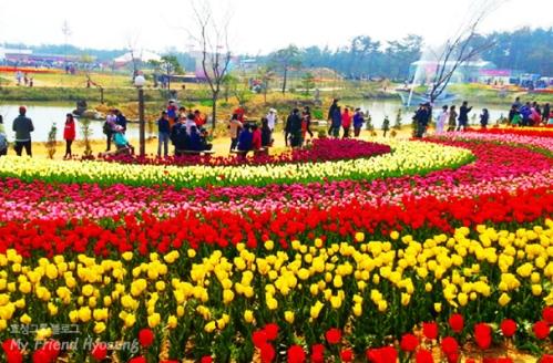 Taean Tulip festival 2