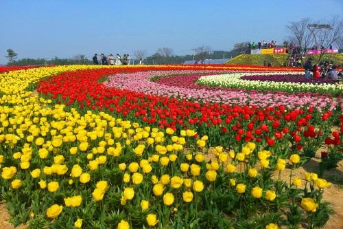 Taean Tulip